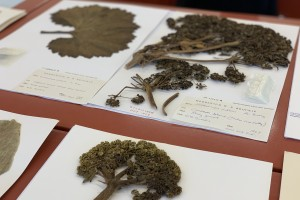 Samples from the Allan Herbarium