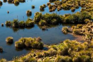 Rakatu Wetlands. Image: Bradley White