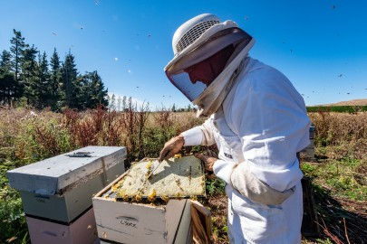 Checking out the health of a beehive. Image: Bradley White