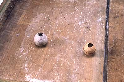 German wasp nest (L); Common wasp nest (R)