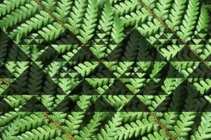 kaupapa Maori