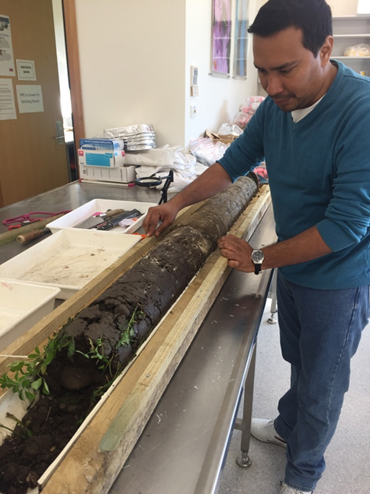 Soil core extracted to a depth of 1.5 m from lucerne to collect samples for analysis of the microbial processes regulating carbon and nitrogen cycling