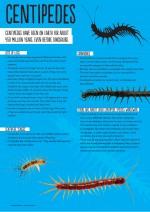 Poster: centipedes