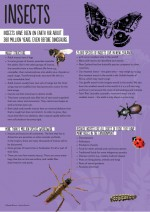 Poster: Insects