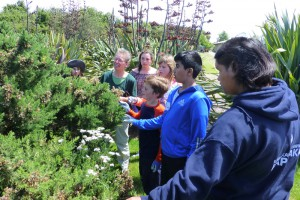 Students hunt for biocontrol insects on gorse.