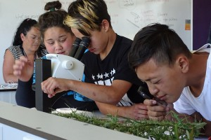 TKKM students examining weeds using microscopes and hand lenses.