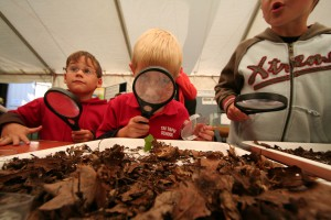 BioBlitz: Fiinding out what can be found in leaf litter