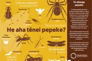 He aha tēnei pepeke? What is this bug? Poster screenshot