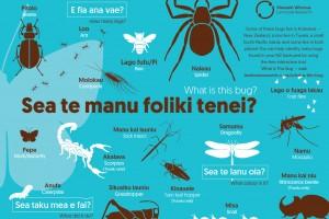 Sea te manu foliki tenei? What is this bug?