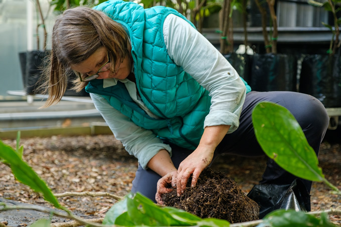 Caring for taonga plants