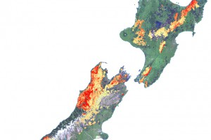 Map of NZ showing beech forest flowering