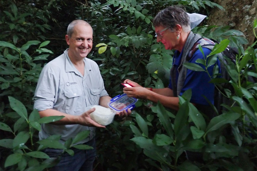 MWLR's Quentin Paynter and Maja Poeschko from the Cook Islands Ministry of Agriculture releasing the beetles into the trees
