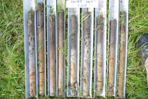 Soil cores from an Ultic soil under pasture