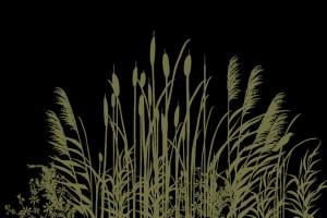 Wetland Grass