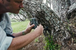 Al Glen attaching a motion camera to a tree