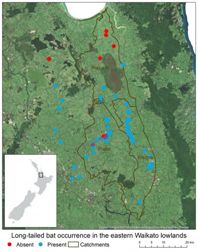 Map showing long-tailed bat occurence in the eastern Waikato lowlands