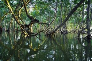 Mangroves. Image: Timothy K via Unsplash