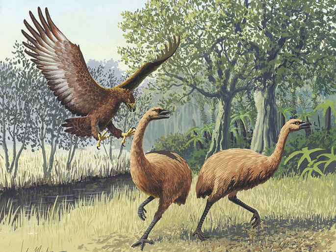 Giant Haasts eagle attacking New Zealand moa