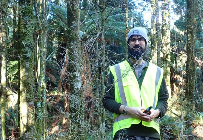 Dr Michael Bartlett surveying a population of rōhutu [Neomyrtus pedunculata] – one of the native New Zealand species in the family affected by Myrtle Rust. Image: Roanne Sutherland (Scion)