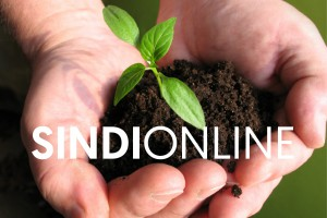SINDIonline