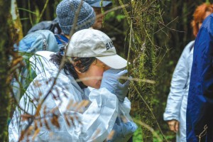 Dr Mahajabeen Padamsee inspects a leaf for signs of myrtle rust during a field trip to Taranaki