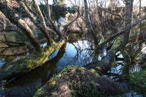 Trees growing on the riverbank of the Waikato river in Hamilton.