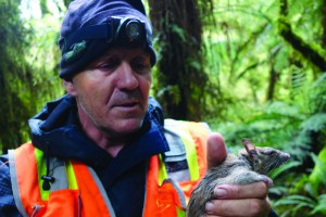 Grant Morriss and a sedated ship rat with radio collar attached, Lake Alabaster, Fiordland.