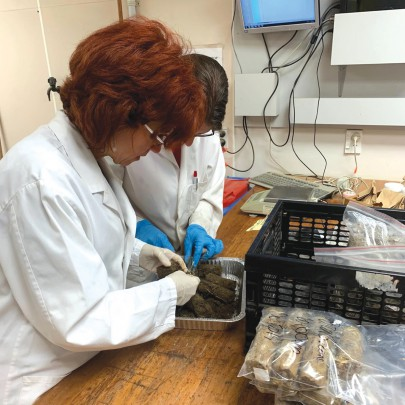 Dr Gwen Grelet and Ngaire Foster analyse soil cores in the lab