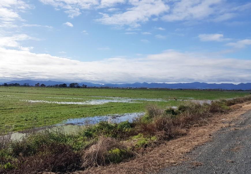 Peat soils close to sea level after rainfall in Hauraki.