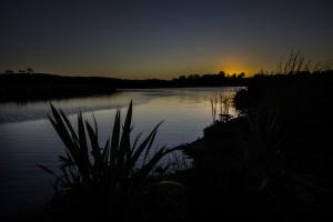 Waiwhakareke Natural Heritage Park in Hamilton