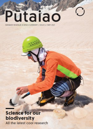 Pūtaiao Issue 6. Researcher Phil Novis taking snow and ice samples from the Fox Glacier. Photo: John Hunt.