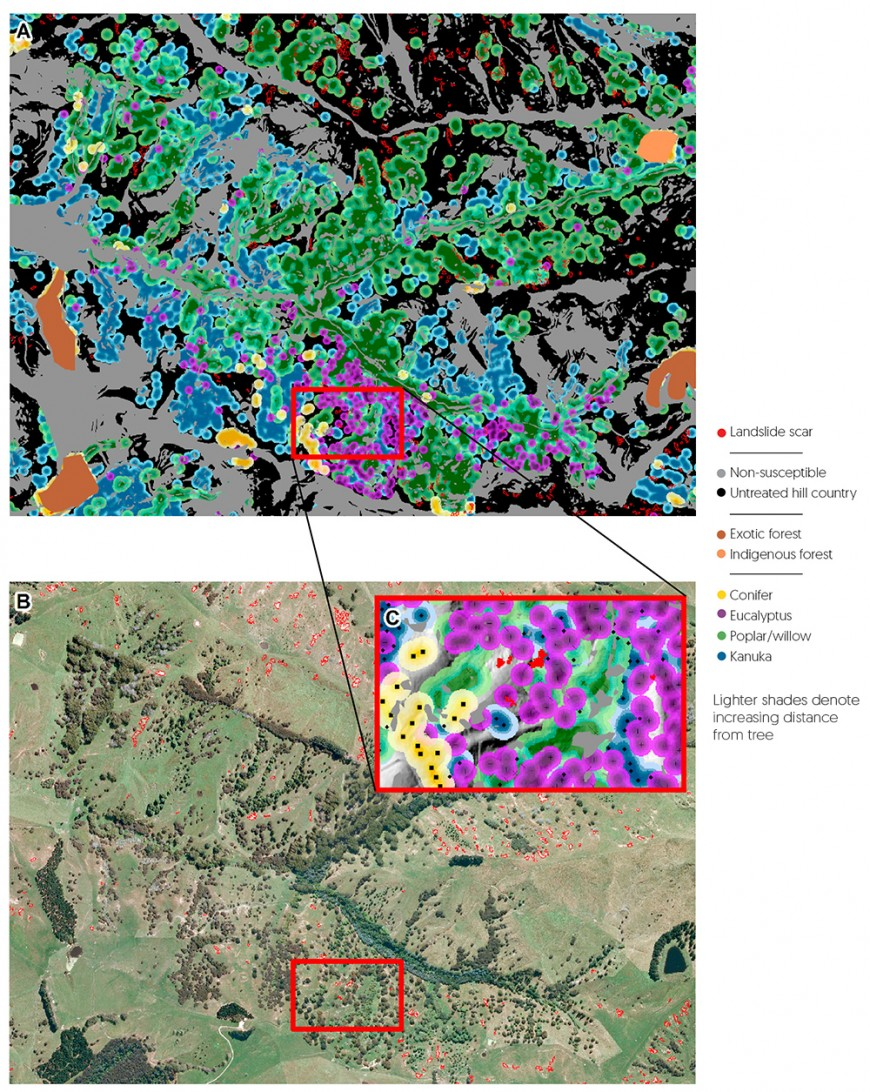 LiDAR imagery of tree crowns delineates species and crown height, enabling landslide risk to be calculated. A = false colour map, B = satellite view, C = detail of individual tree crowns.