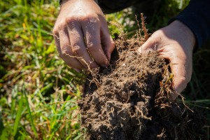 Soil from diverse pasture, Waimate