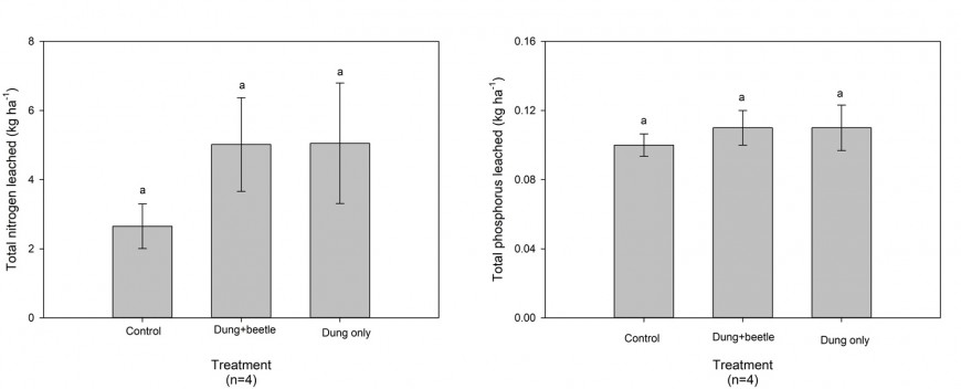 Figure 2. Mass of total N and total P leached from untreated control, treated with dung beetles and dung application, and treated with dung only lysimeters. Mean values with the same superscript letter are not significantly different. Data means are shown