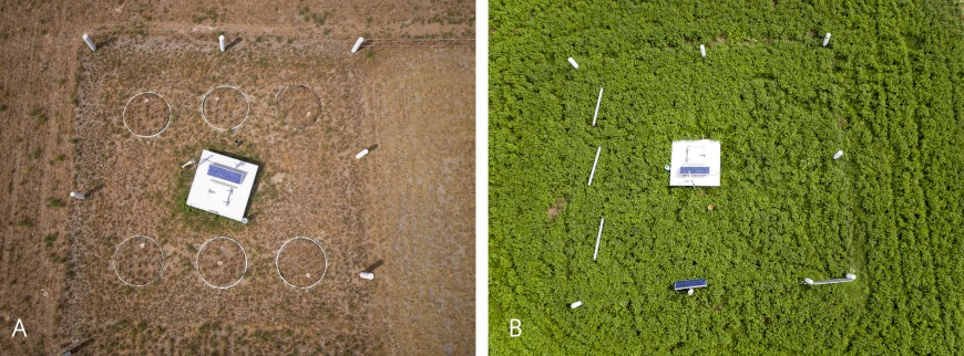 Figure 1: Aerial photographs of lysimeters planted with lucerne under non-irrigated (A) and irrigated (B) conditions at the Ashley Dene Research & Development Station during a summer drought period.