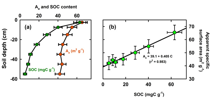Figure 1. (a) Averaged apparent specific surface area (Aa) and soil organic carbon (SOC) with depth, and (b) Aa plotted against SOC. Error bars show 95% confidence intervals. Reproduced from Kirschbaum et al. (2020).