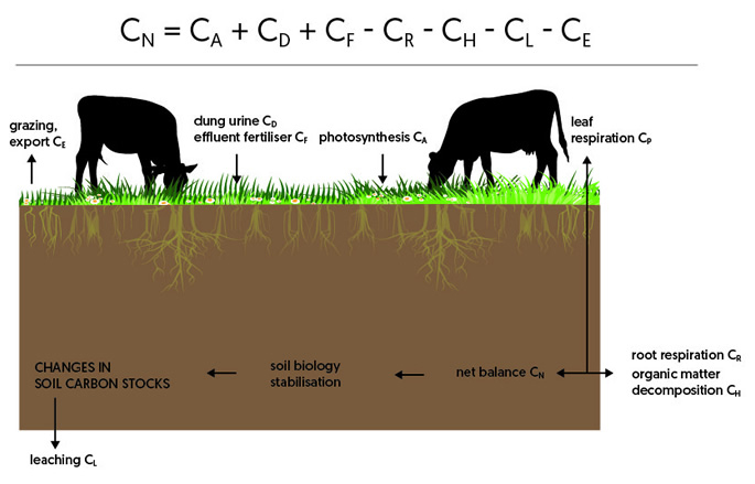 Fig.1 Components of the carbon balance for a crop grazed by cattle. The annual net carbon balance, CN, is the sum of the components of inputs minus losses of carbon. The components CP, CR and CH, comprise respiration losses (adapted from Whitehead et al 2018).