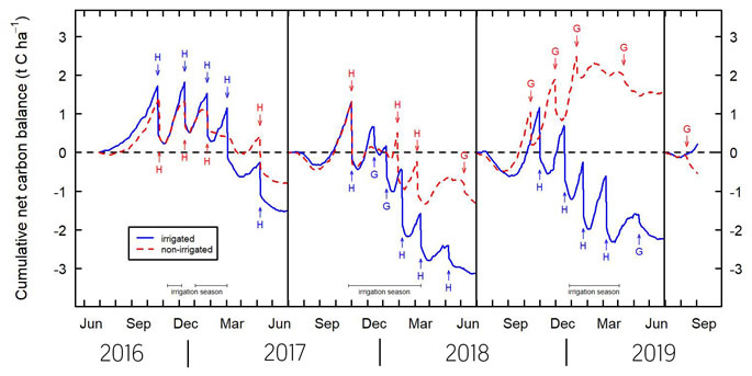 Fig 3. Cumulative net carbon balance for irrigated (blue line) and non-irrigated (red dashed line) lucerne for three years after the establishment of lucerne and start of the fourth year. The symbols H and G refer to events for harvesting and grazing, respectively and the duration of the irrigation seasons are indicated. The dashed black line is the carbon neutral state with lines above this showing net increases in ecosystem carbon storage and lines below this showing net carbon losses (adapted from Laubach et al. 2019).