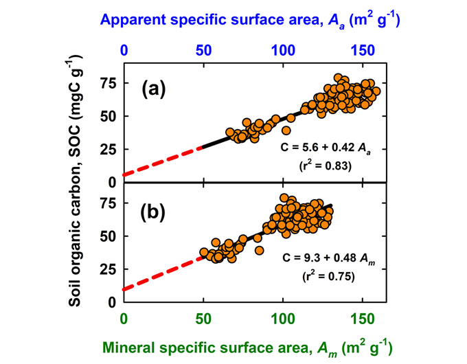 Figure 2: SOC and specific surface area measured for different soils at Troughton Farm (Waikato region). SOC is plotted against apparent specific surface area (a) and against mineral specific surface area (b) after subtracting the SOC based water adsorption from measurements of apparent specific surface area. Data from G.Y.K. Moinet (unpublished).