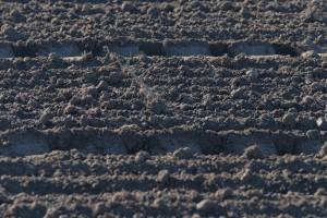 soil surface