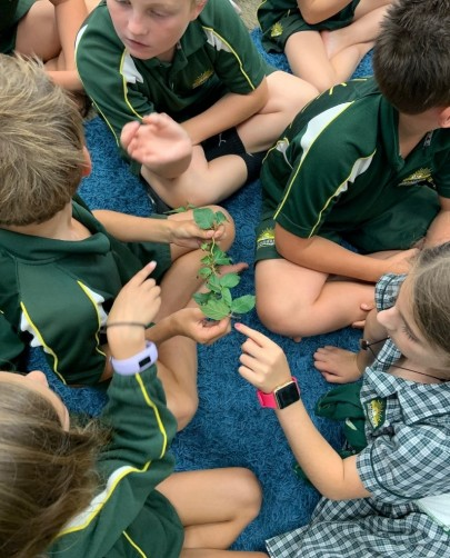 Children looking at Honshu white admiral caterpillars