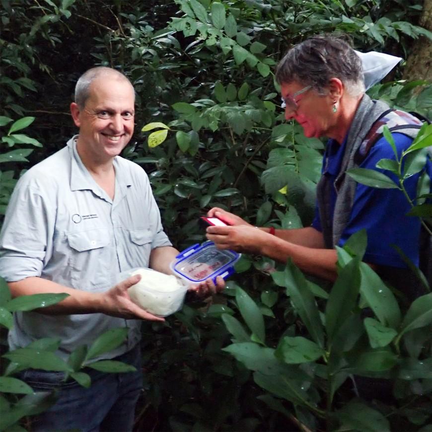Quentin and Maja releasing the flea beetle in Rarotonga