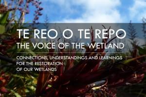 Te reo o te repo – the Voice of the Wetland