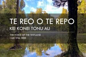 Te reo o te repo – kei konei tonu au: The Voice of the Wetland – I am still here