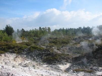 Fumaroles near Lake Rotokawa, north of Taupo, with prostrate kanuka ([Kunzea ericoides] var. [microflora]) scrub (middle distance) and wilding pines (background) (Bruce Burns)