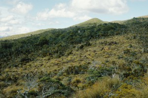 Ultrabasic boulderfields (centre) near Junction Hill, Gorge River, South Westland, with red tussock ([Chionochloa rubra]) and pink pine ([Halocarpus biformis]) (Rowan Buxton)