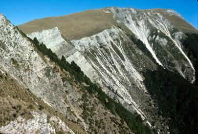 Calcareous cliffs on Ben More, Marlborough, with silver tussock ([Poa cita]) and [Myosotis arnoldii] (Peter Williams)