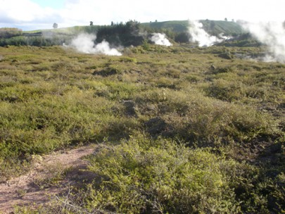 Geothermally heated ground (dry) with prostrate kanuka scrub at Karapiti/Craters of the Moon, north of Taupo (Susan Wiser)