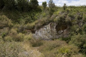 Hydrothermally altered ground (now cool) at Mokai, north–west of Taupo, with prostrate kanuka persisting (Mark Smale)
