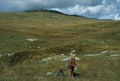Erosion pavements scattered amongst grassland Matiri Range, western Nelson (Peter Williams)